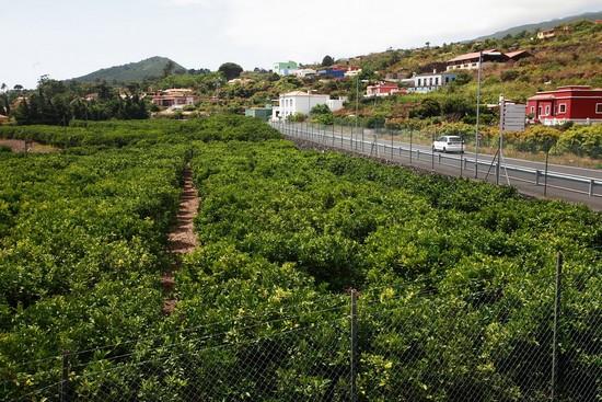 Breña Alta cultivos