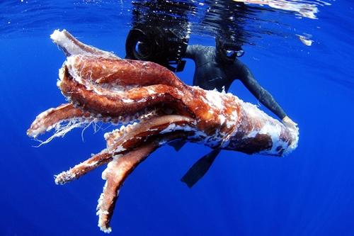 Fotografía facilitada por la empresa Aquawork de los restos de un calamar gigante localizados en aguas del sur de Tenerife en agosto de 2011. | EFE