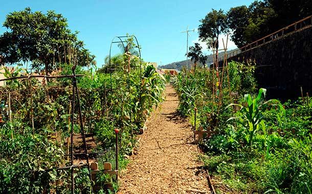 huerto urbano ecológico en La Orotava