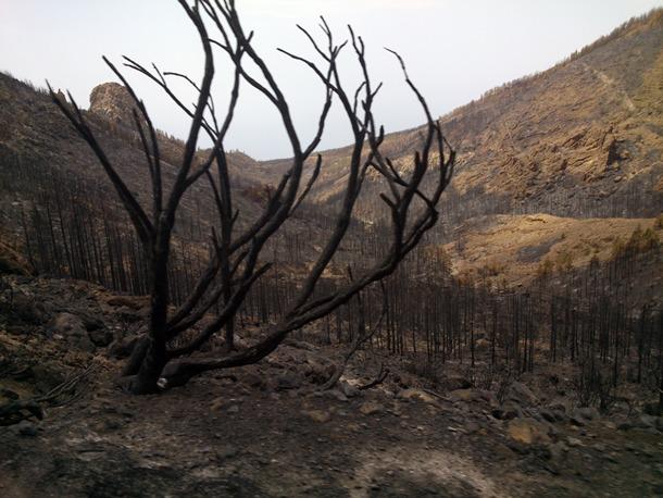 incendio sur tenerife Guía de Isora Adeje y Vilaflor