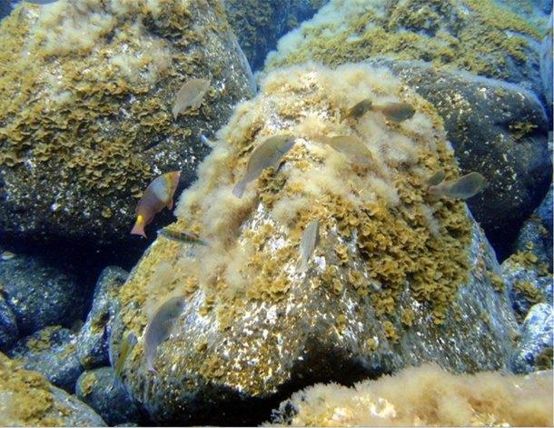el hierro fondos marinos tras la erupción