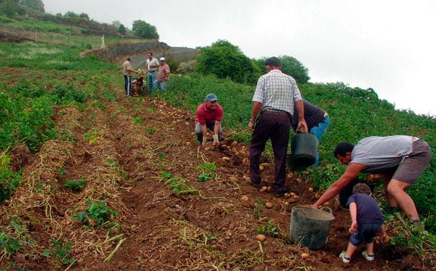 Explotación agrícola - Tenerife Norte
