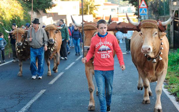 Caminata San Antonio 2013