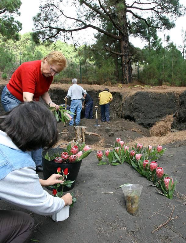 FOSA PINO DEL CONSUELO MEMORIA HISTÓRICA LA PALMA