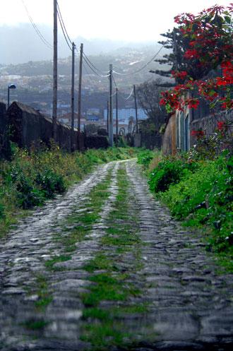 Camino del Ciprés
