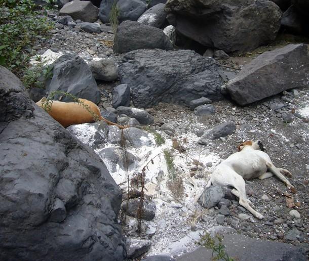 Imagen facilitada por la Guardia Civil de los perros muertos. | SEPRONA