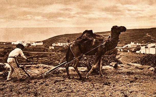 Un campesino ara la tierra, en el Sur de Tenerife (principios del siglo XX)