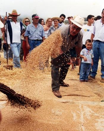 Domingo Romero es mantenedor de tradiciones en Buenavista del Norte. | DA