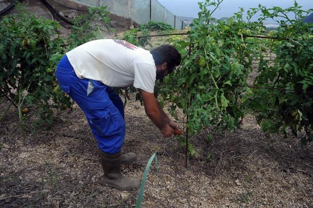 El Mapa de Cultivo desvela que más del 50% del suelo agrícola de la isla está abandonado. / J.G.