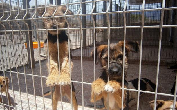 Desde Enero Más De 200 Perros Han Sido Abandonados En La Comarca Diario De Avisos