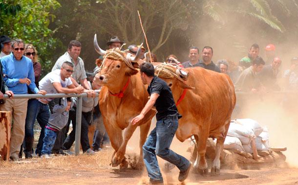 Deportes canarios y de Euskadi  se unen para que 5.000 personas disfruten del día nacional de nuestras tradiciones, en la Casa del Ganadero. / JAVIER GANIVET