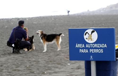 Un hombre pasea a sus perros en un área autorizada para este tipo de animales que ha sido abierta en la playa de Bocabarranco, en las Palmas de Gran Canarias./ EFE