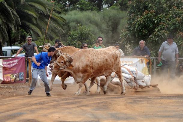 Arrastre de ganado