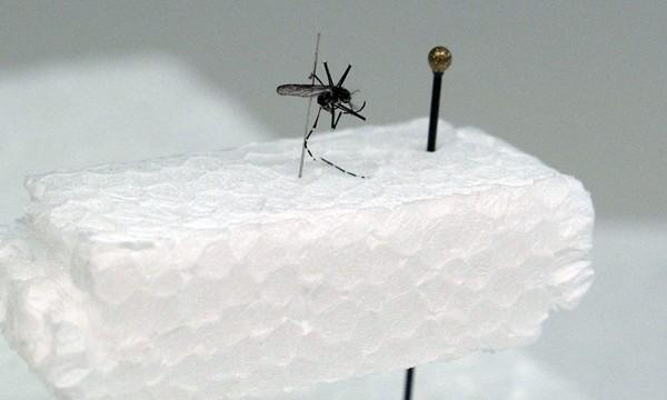 Sanidad avala las medidas de control del dengue de Canarias