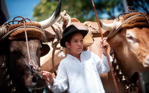 Los guayeritos mostraron sus habilidades y el mando sobre las yuntas y las carretas. / FRAN PALLERO