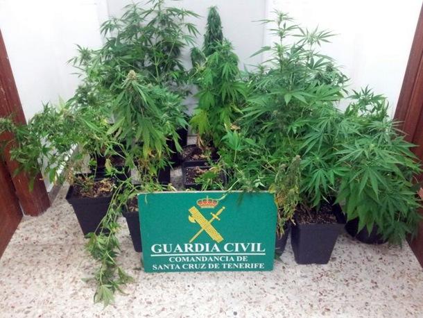 Marihuana Santa Cruz