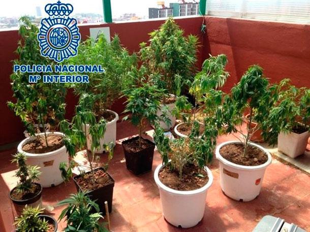 Marihuana azotea Tenerife