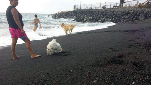 perros playa El Puertito de Guimar