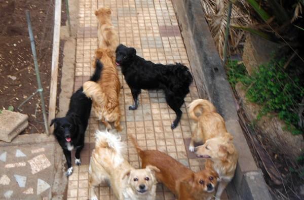 perros rescatados en La Laguna