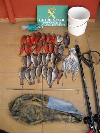 Pulpo, abadejo, sargo y varias viejas decomisadas así como material y dos fusiles de pesca submarina. | GUARDIA CIVIL