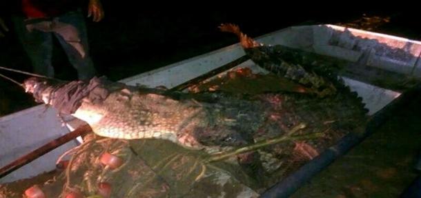 Cocodrilo mata a niño en Oaxaca México