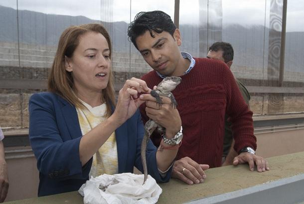 Lagartos de La Gomera viajan a El Hierro