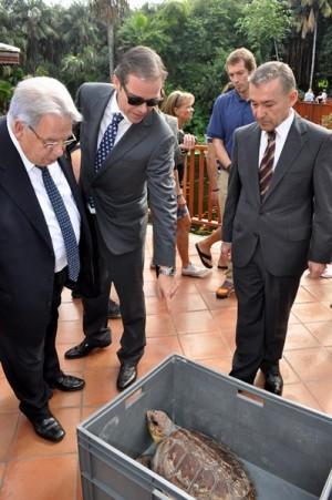 Las autoridades obserban a la tortuga boba. | M. P.