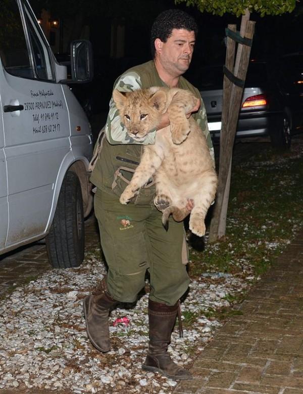 El hijo de la Pantoja lleva leones a una fiesta