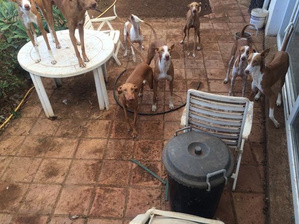 perros casa particular de La Palmita, en La Victoria de Acentejo