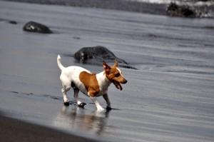 En cinco años el aumento de perros censados en el municipio de Granadilla es considerable. | MOISÉS PÉREZ