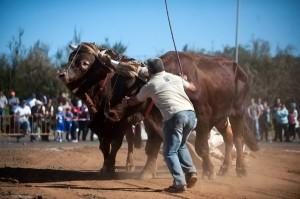 La Consejería de Agricultura del Gobierno debe apoyar el arrastre. / DA