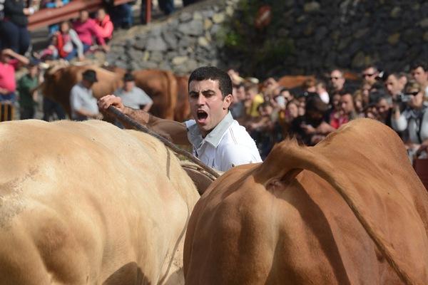 Juan Tomás Hernández gana en toros de primera y es uno de los mejores guayero de las Islas. | S. M.