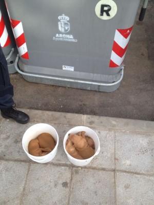 Los animales fueron abandonados dentro de este bidón de basura. | DA