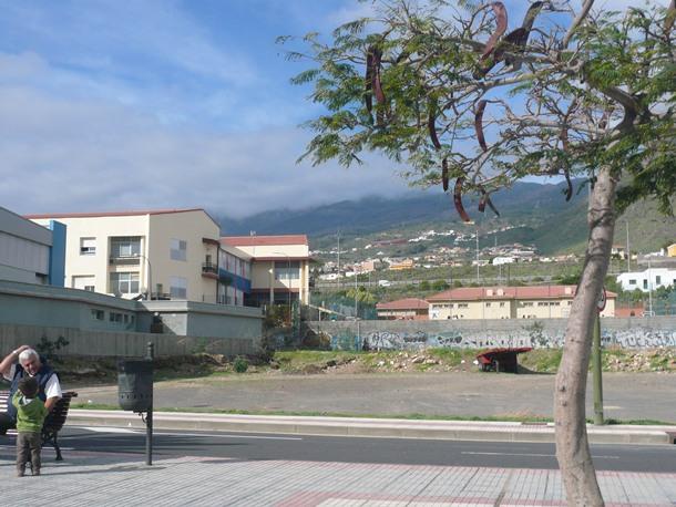 terrenos nuevo colegio Punta Larga rambla de Los Menceyes