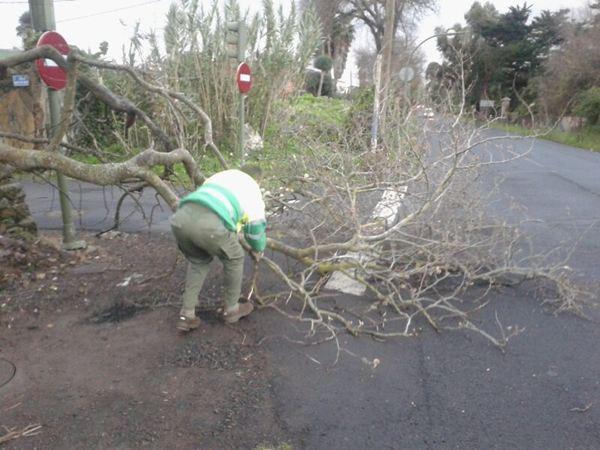 Caída de ramas por el viento. / JAVIER GANIVET