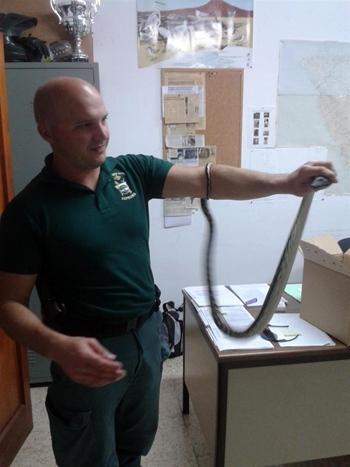 agente del Seprona de la Guardia Civil con la serpiente Pitón
