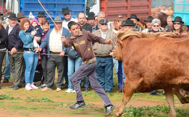 Los guayeros jóvenes dan otra dimensión a uno de los deportes de moda en Tenerife.  / SERGIO MÉNDEZ