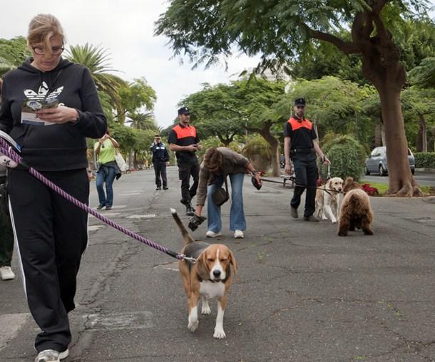paseo de perros mascotas
