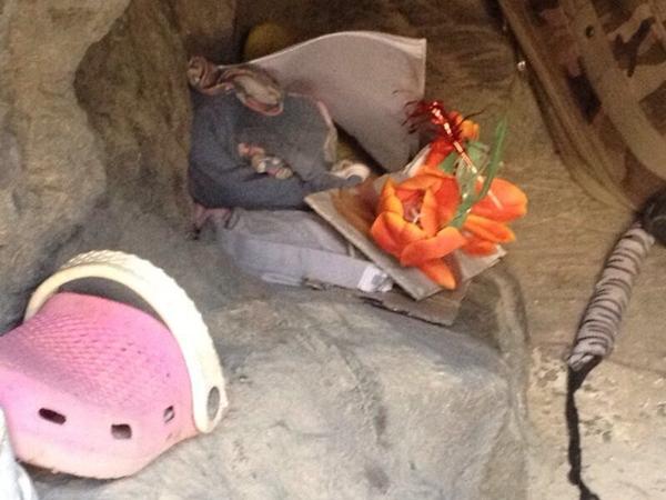 La madre, con su nuevo acompañante, y dos imágenes del interior de la cueva de Montaña de Guaza.   EXPRESS