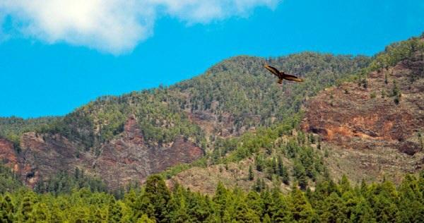 La ruta de Los Brezos, en lo alto del municipio, ofrece imágenes tan sugestivas como esta. / DA