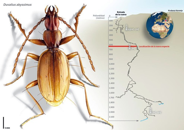 El insecto fue encontrado en el Cáucaso Occidental. / DA