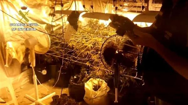 Marihuana incautada por la Guardia Civil. | DA