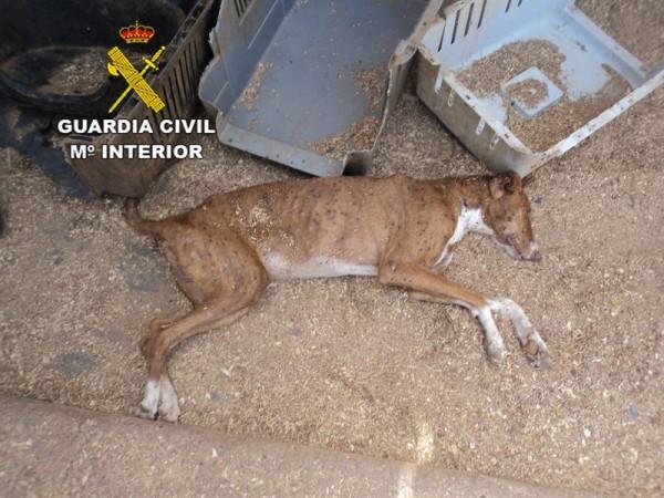Uno de los perros maltratados, en pésimo estado. | DA