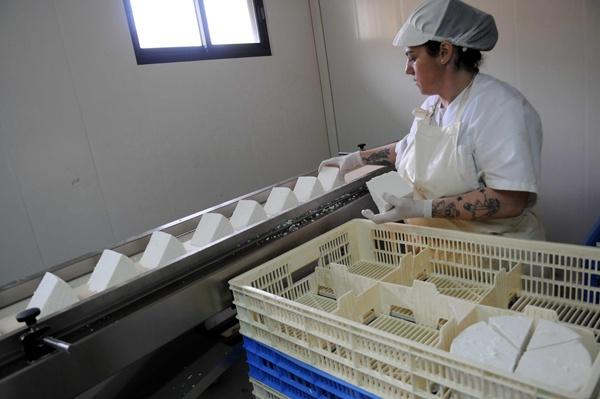En Tenerife solo opera una instalación industrial de queso, la de Benijos, en La Orotava. / M. P.