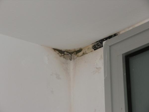 Las humedades en la parte soterrada del edificio de La Granja son evidentes. / DA