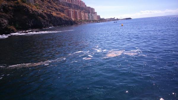 La playa muestra signos de contaminación. / DA