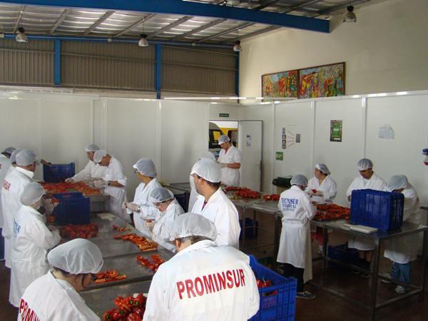El deshidratado de frutas y hortalizas es uno de los talleres más participativos y además genera ingresos. | N.C.