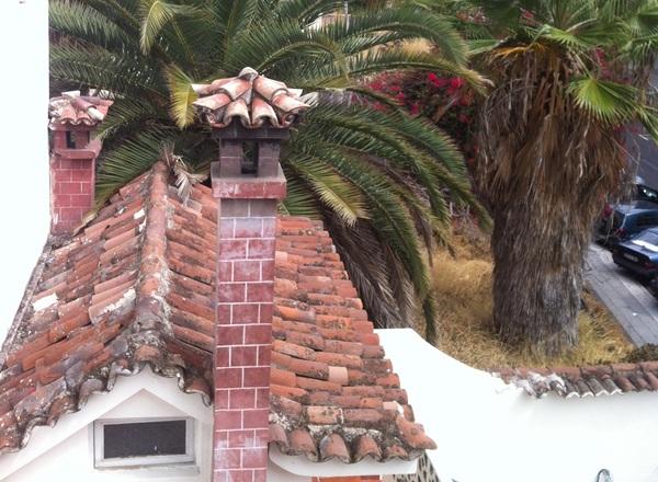 Las palmeras sin podar son la principal vía de acceso a su vivienda. /  DA