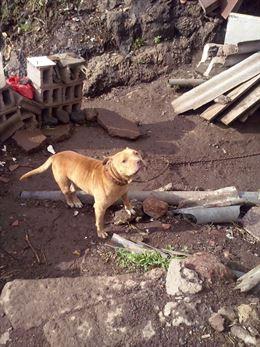 Los perros carecían de la documentación exigida por su raza. / E.P.