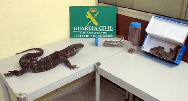 Varias de las intervenciones del Seprona han estado vinculadas a especies animales exóticas. / DA
